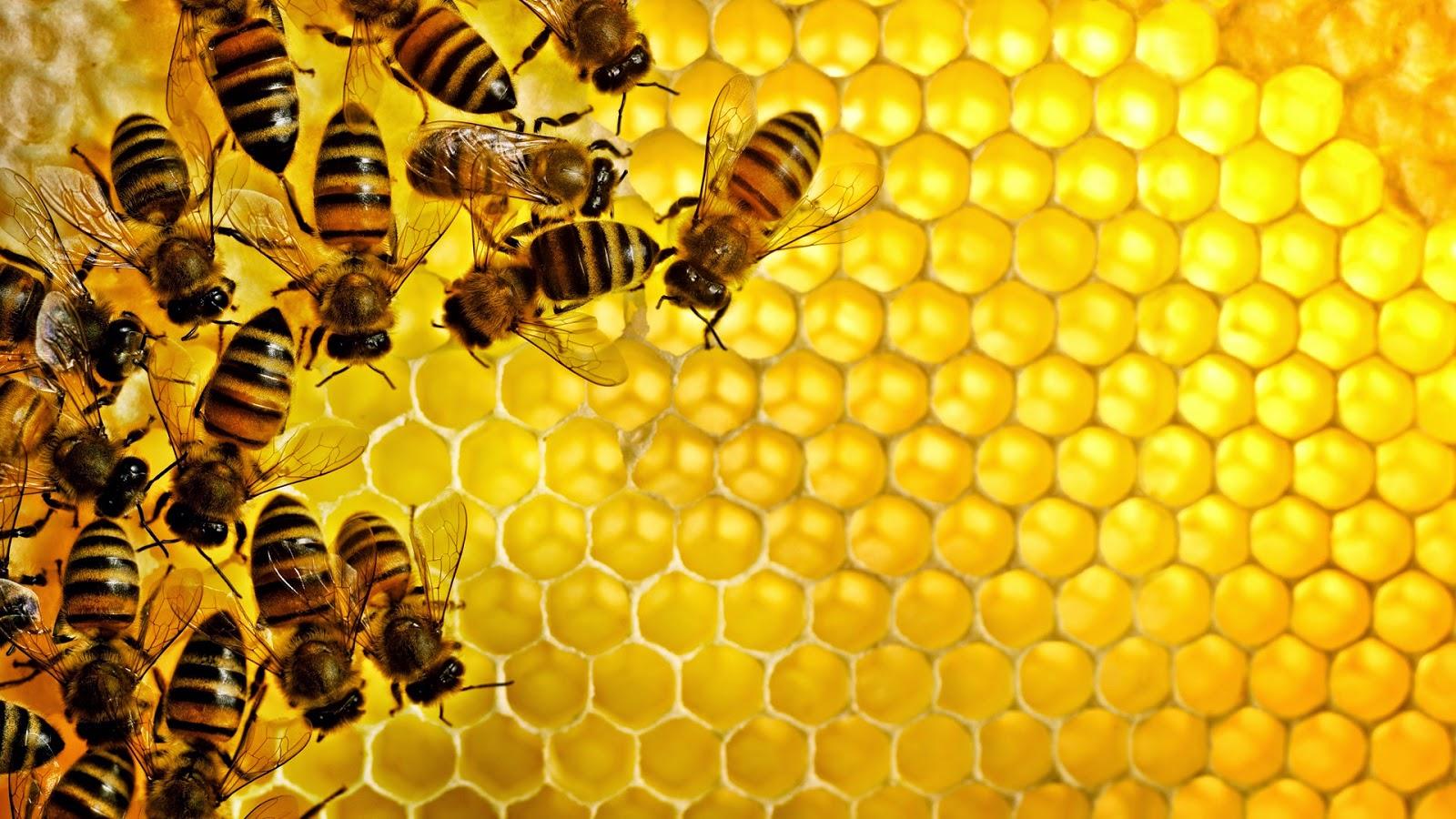 أخبار علمية :  النحل يعرف  كيفية إنجاز عمليات  الجمع و الطرح.
