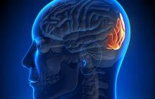 مجال التفكير: منطقة الدماغ التي تراقب الجدران المحددة.