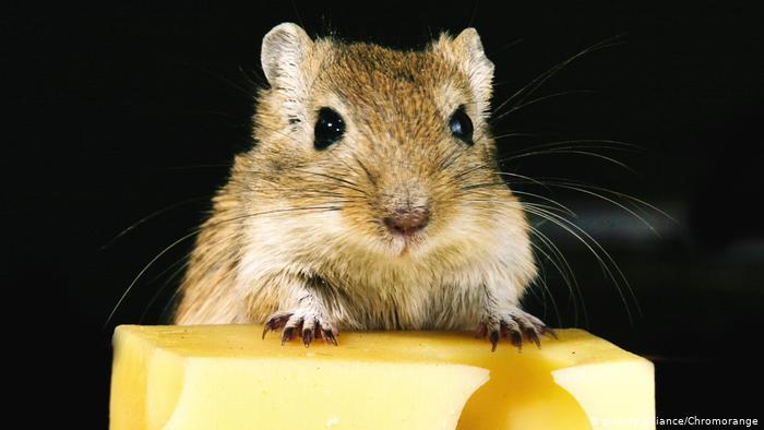 دراسة : المكافئة ليست ضرورة للرفع من مردودية تعلم الإنسان و الحيوان.