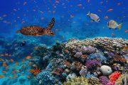 التنوع البيولوجي: الطبيعة آخذة في الانخفاض