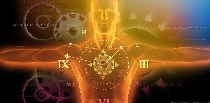الساعات اليومية: تظهر أجزاء الجسم ليلاً ونهاراً بشكل مستقل عن الدماغ